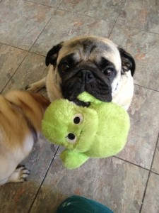 Bodhi with his Froggie