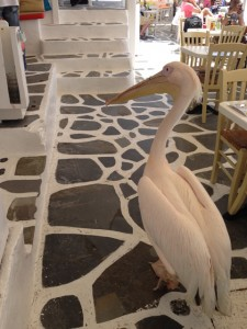 Mykonos Mascot, the Pelican